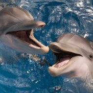 Florida Family Travel Clearwater Marine Aquarium
