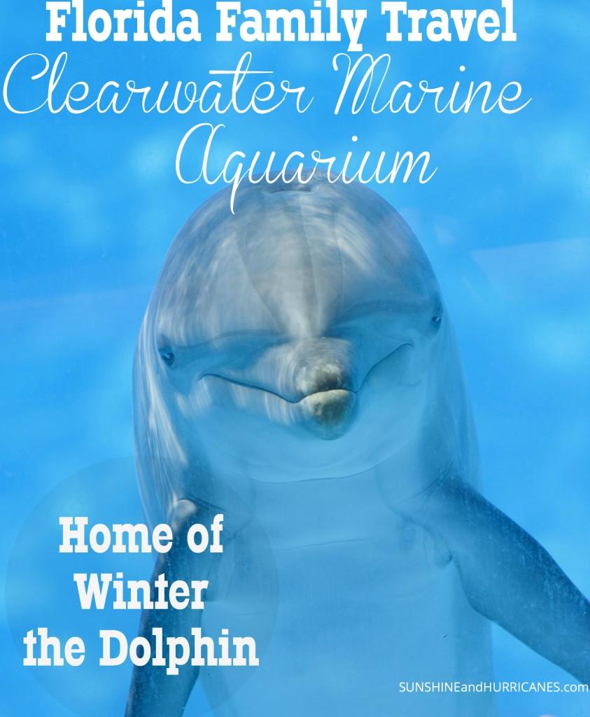 Florida Family Travel Clearwater Marine Aquarium