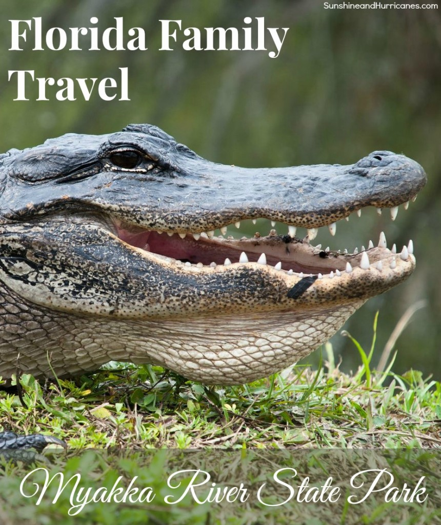 Looking for a Florida adventure that is family friendly and a little different than a day at the beach or a trip to a theme park. There are amazing natural sights to be seen a Myakka River State Park. Spend the day or come to camp, it's a great outdoor escape. Florida Family Travel Myakka River State Park. SunshineandHurricanes.com