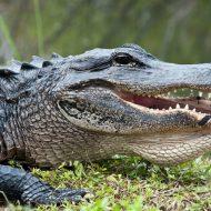 Florida Family Travel Myakka River State Park