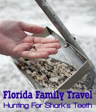 Florida Family Travel Hunting For Shark's Teeth
